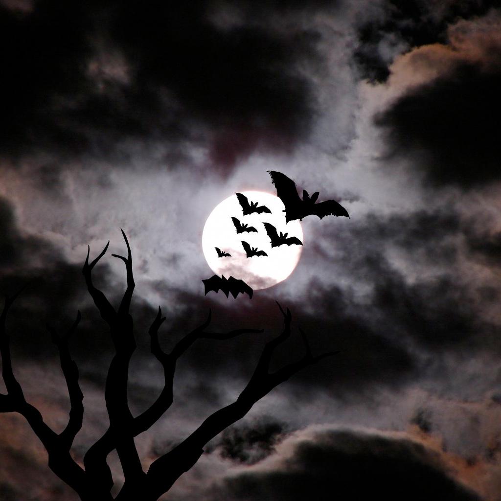 Happy Halloween [ wallpaper Holiday wallpapers