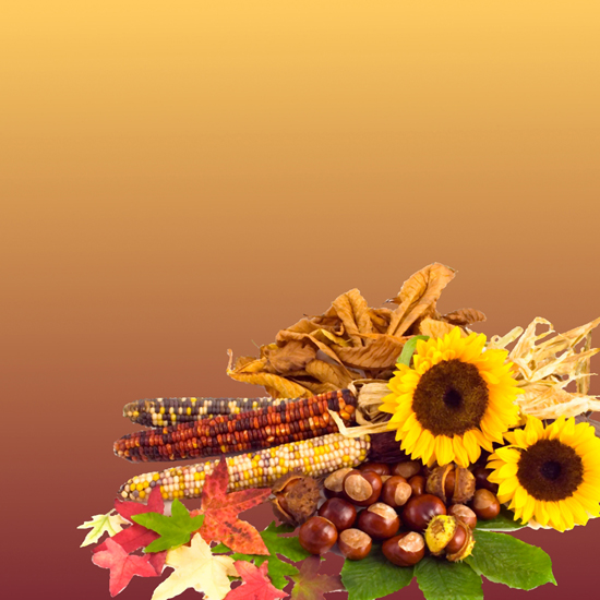 Free Thanksgiving Wallpapers for iPad: Bumper Harvest 16