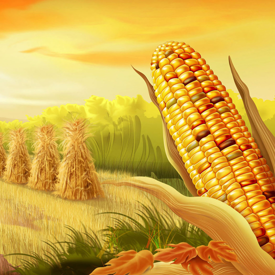 Free Thanksgiving Wallpapers for iPad: Bumper Harvest 5