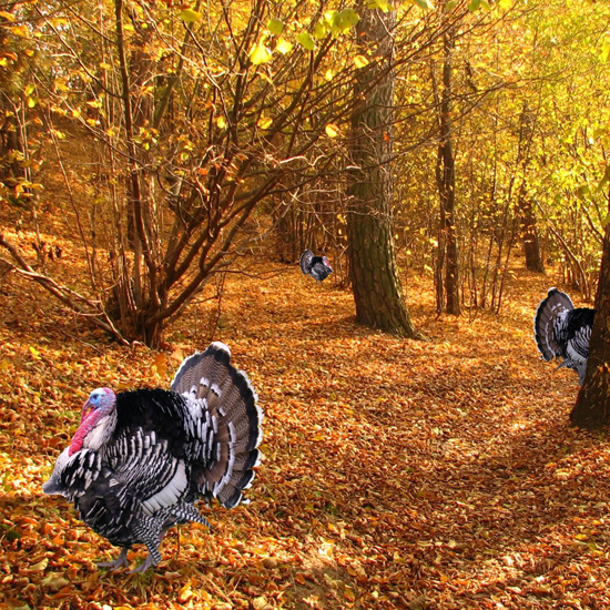 Free Thanksgiving Wallpapers for iPad: Turkey 22